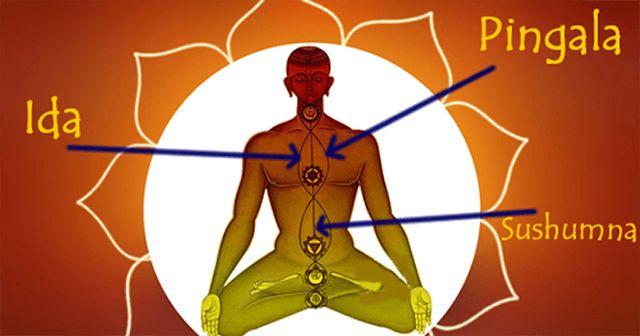 A három legfontosabb nadi, amelyek a gerinc mentén futnak: az ida, a pingala és a sushumna.