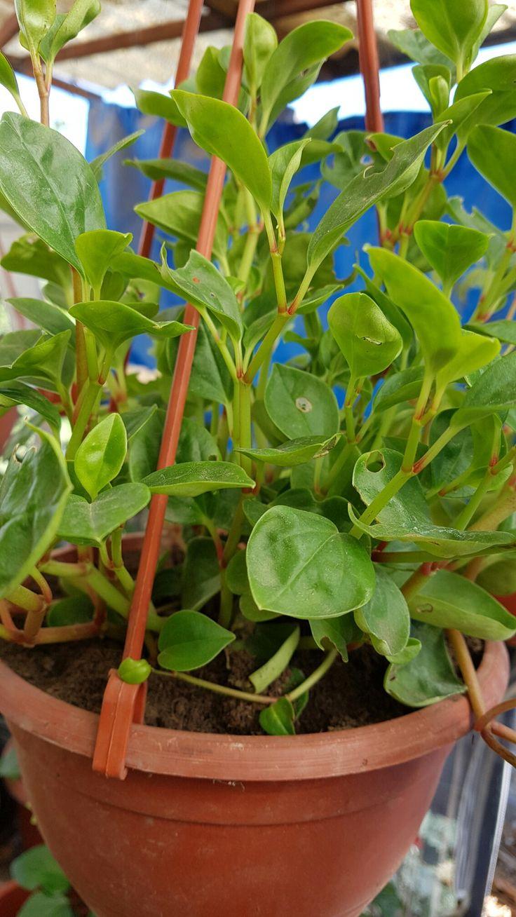 582 mejores im genes sobre mis plantas en pinterest no - Plantas de sol directo ...