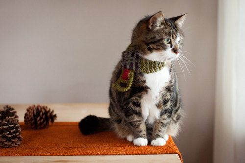 ready for winter: Kitty Cat, Knits Scarves, Cute Ideas, Cat Scarfs, Scarfs Ideas, Fat Cat, Kitty Scarfs, Cat Lovers, Kittens Scarfs