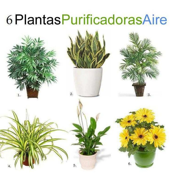 6 plantas purificadoras de aire