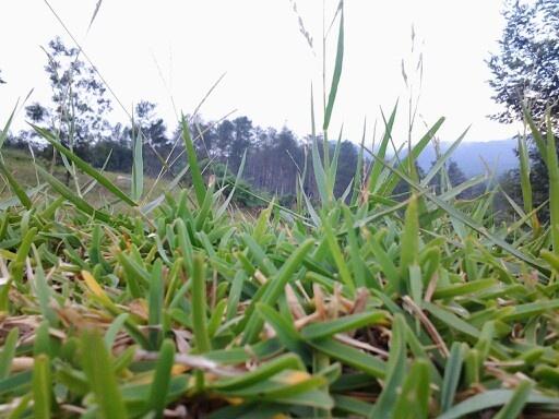 Green green grass