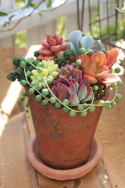 Simply beautiful.== This year I love succulents even more than past years. I will DIY in a large clear glass vessel a succulent arrangement much like this one.~Dee ALSO QUESTION??? Do Succulents grow ok indoors or are they outside plants mainly??? Thanks anyone:))