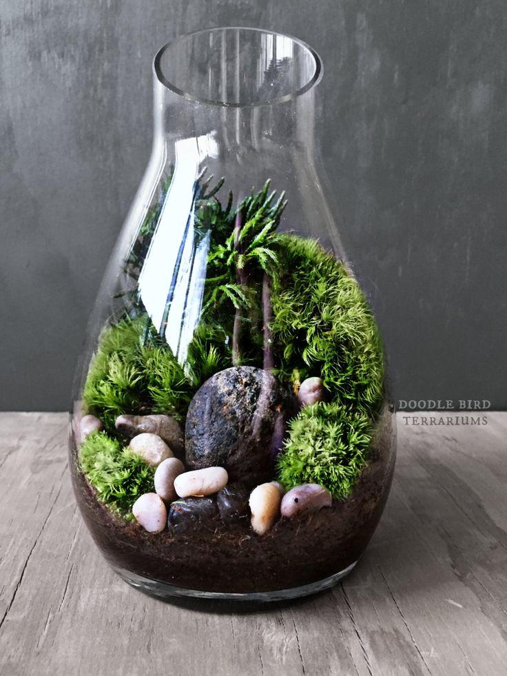 Carafe Moss Terrarium Gift Set - Live Houseplants Office Decor - Miniature Garden Under Glass by DoodleBirdie on Etsy https://www.etsy.com/listing/207483391/carafe-moss-terrarium-gift-set-live