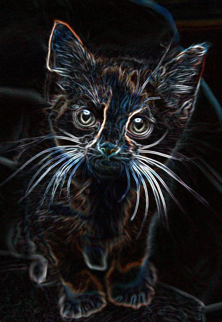 Small Bob- Heroes of Olympus House of Hades I can't help but this kitty is soooooooooo cute!
