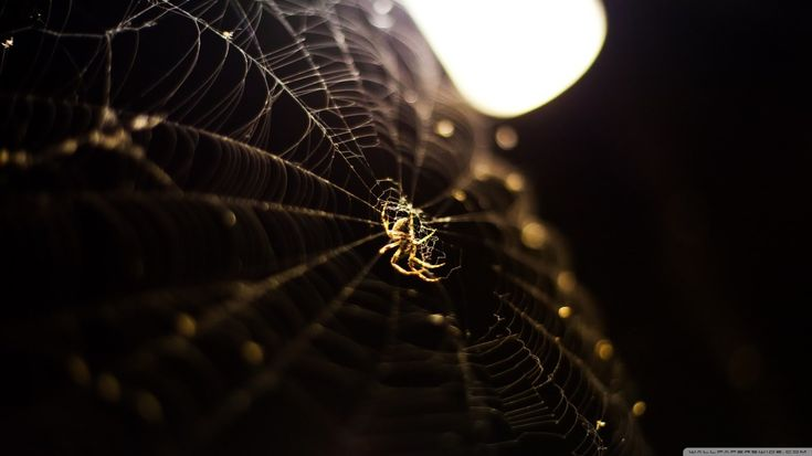 spider pic: High Definition Backgrounds, 1366x768 (103 kB)