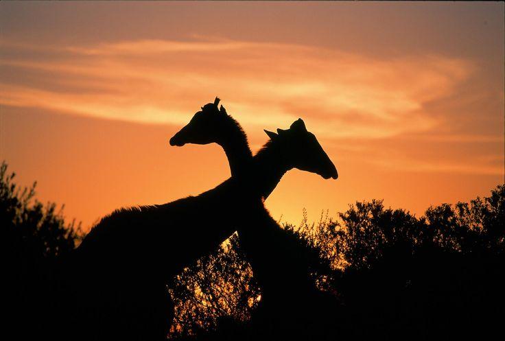 Africa photos | Africa.... un continente único! Disfrutá estas imágenes.