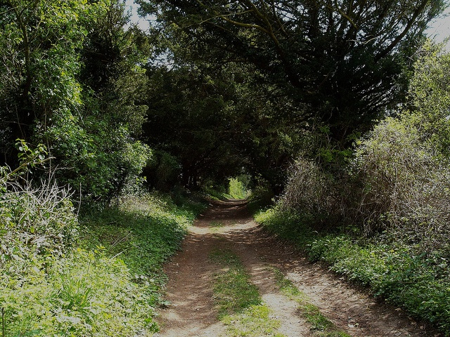 Hollow-way-in-Breamore-Woods by David J Coombes, via Flickr