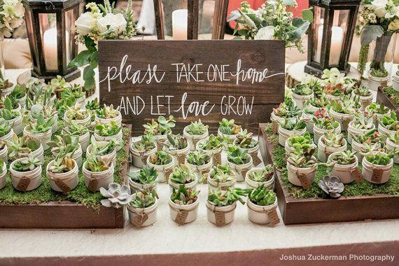 100 Bomboniere succulente in 4 oz Mason Jam Jars con spago bianco o avorio con Let amore crescere Tag