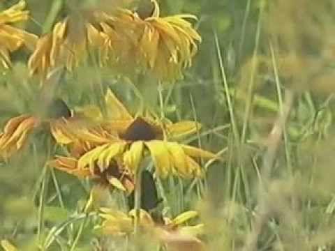 Божий дар.(Фильм о целебных растениях). - YouTube