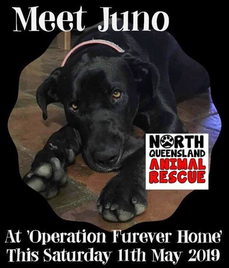Meet Juno At Operation Forever Home Saturday 11th May 2019 At Cannon Park Racecourse Nqar Northqldanimalrescue Cannon Park Animal Rescue Instagram Posts