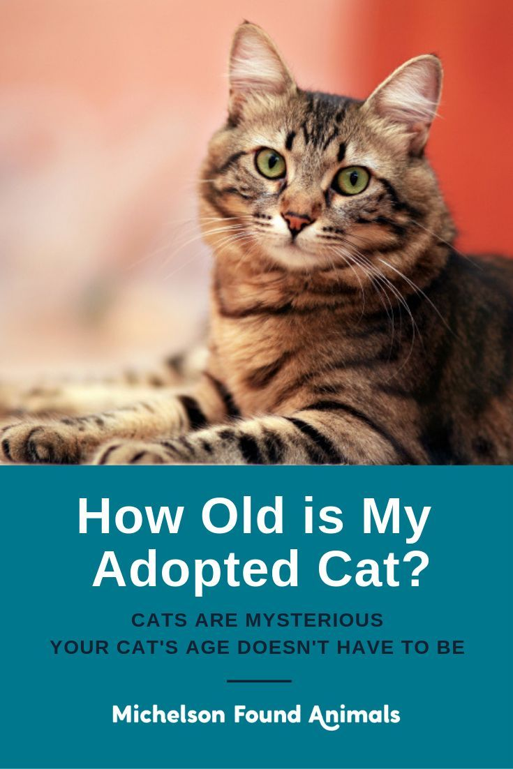 It Can Be Difficult To Tell How Old Your Cat Is But It S Helpful To Know Roughly How Old Your Kitty Is So You Can Provide Better Cat Ages Cats Senior
