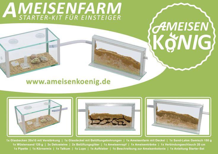 bildergebnis f r ameisen projekt kindergarten ameisen insekten pinterest searching. Black Bedroom Furniture Sets. Home Design Ideas