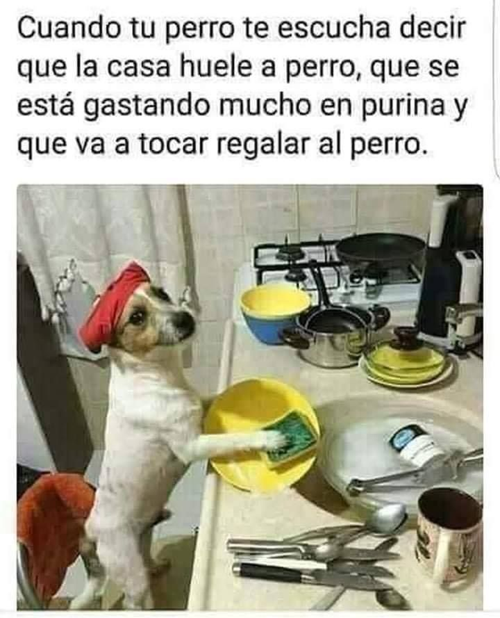 Un Perro Lava Trastes Memes Del Chavo Memes Divertidos Memes