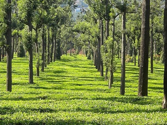 *INDIA Kerala, a state on India's tropical Malabar Coast