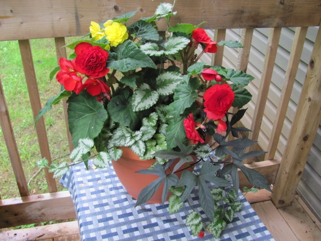 One of my flower pots