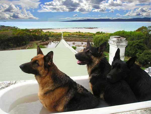 Roof Top Bath