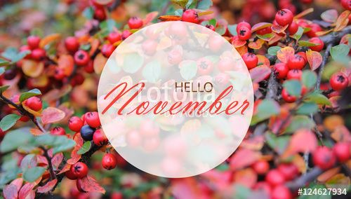 """Download the royalty-free photo """"Hello November wallpaper, autumn background with red berries"""" created by stillforstyle at the lowest price on Fotolia.com. Browse our cheap image bank online to find the perfect stock photo for your marketing projects!"""