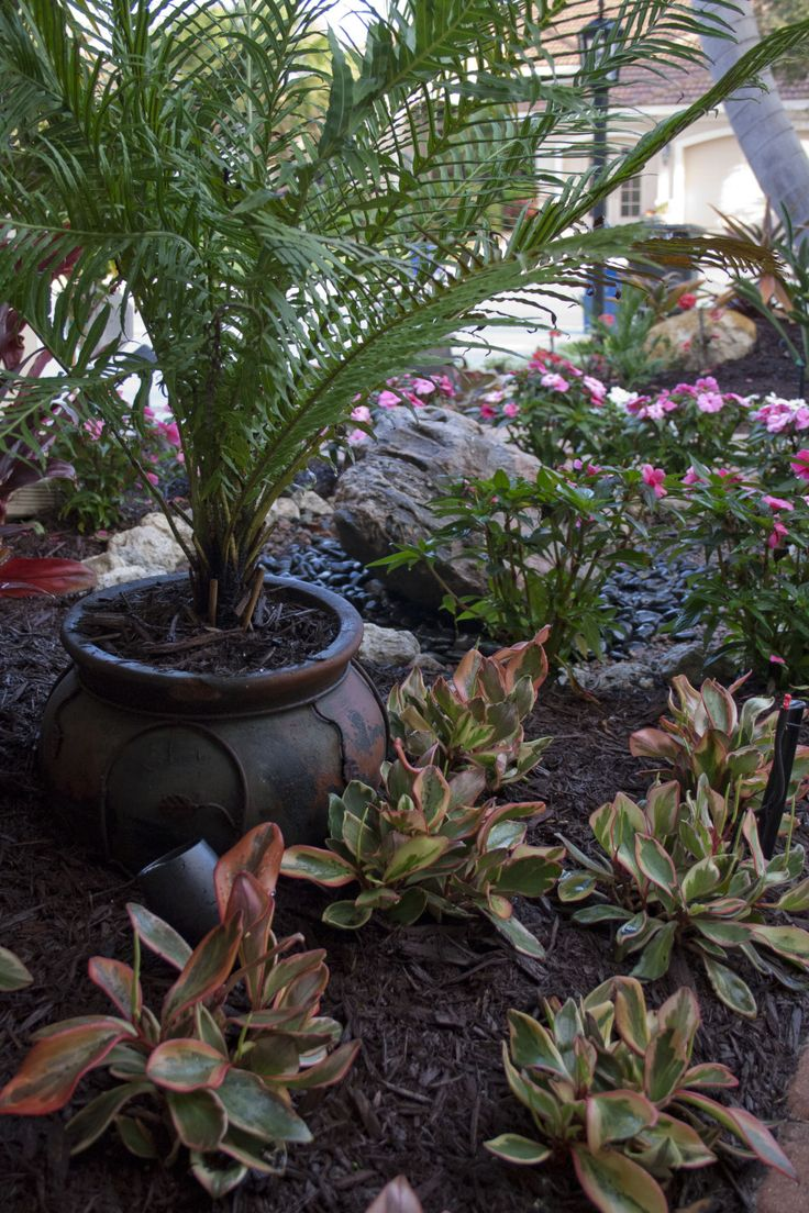 17 best images about florida shade plants on pinterest for Garden design in florida