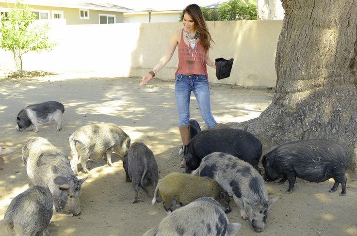 Adult-sized Juliana pigs.