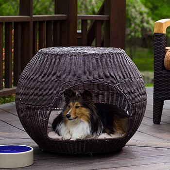 110 Best Mascotas Images On Pinterest Dog Cat Cat Condo And Cat