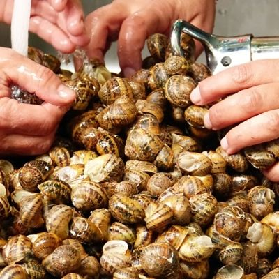 Snails Have Long Been the Lobsters of Cretan Cuisine