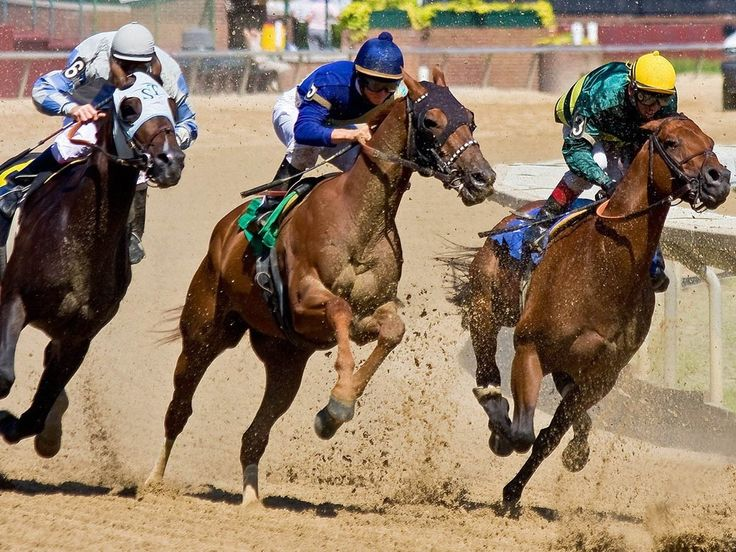Make bets on #Horse at home and enjoy #HorseRacing online. Join Monaco Stallions #Casino now and enjoy virtual horse #Racing at home. Win huge casino money and #Bonuses.   #HorseBetting #Gambling #Betting #Game #Gaming #OnlineGame