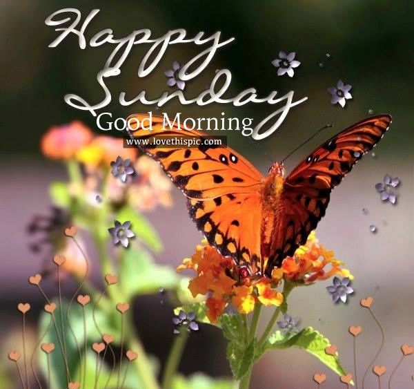 Happy Sunday, Good Morning