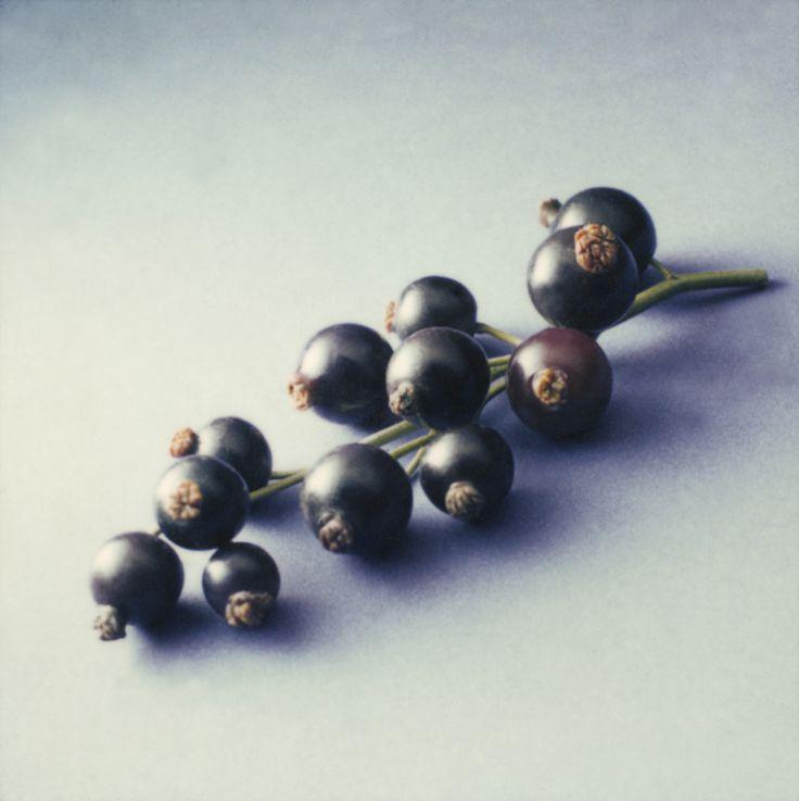 Schwarze Johannisbeere richtig schneiden • Pflanzen Tipps & Tricks • 99Roots.com