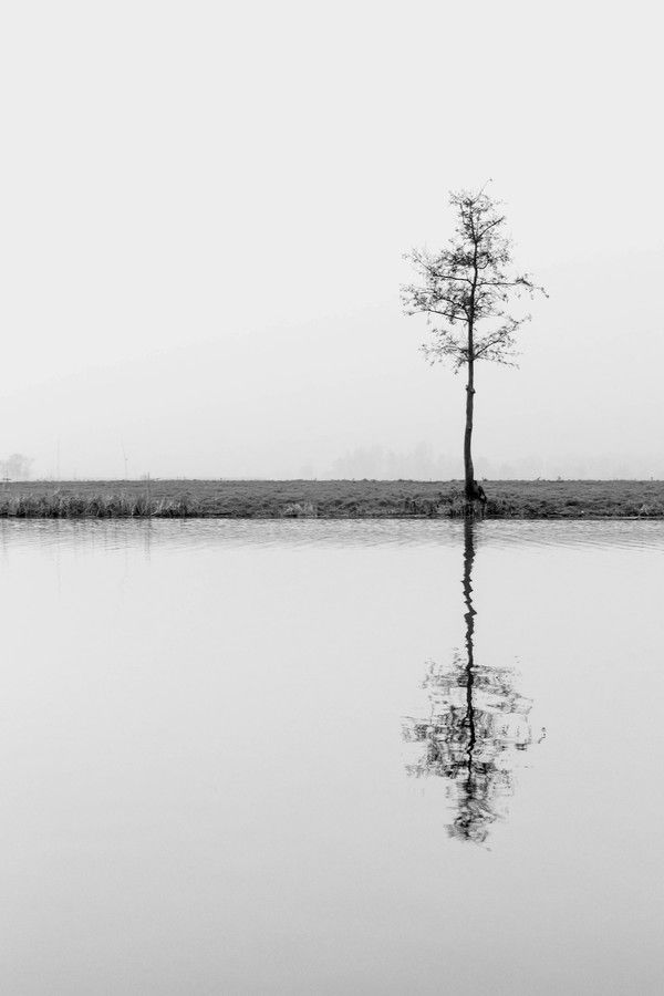 The lonely naked tree by Tieme Pool on 500px