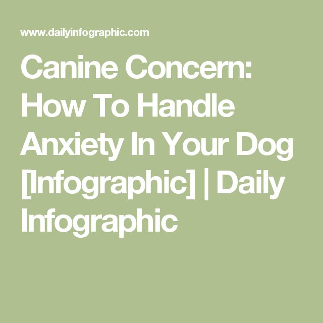 Canine Concern: How To Handle Anxiety In Your Dog [Infographic]   Daily Infographic