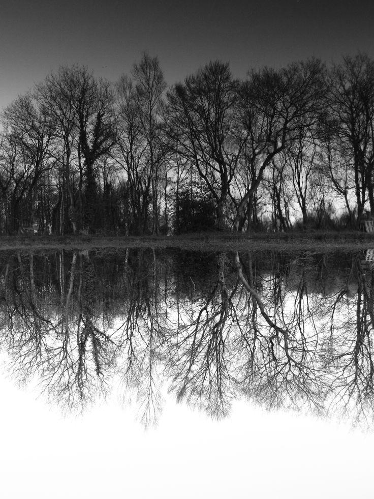 reflets aquatiques