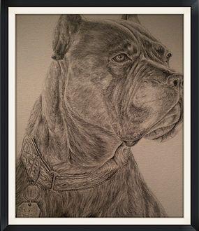 """Itala"" Cane Corse Mastiff, Pencil study. Artist: Ken Wilson"