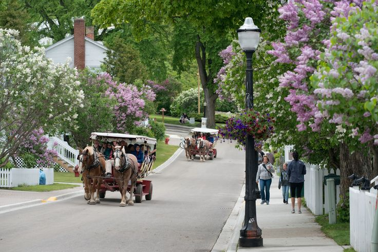 Lilac Festival Time on Mackinac Island. Mackinac Island Market Street Lilacs by MichellePhotos2 (flickr)