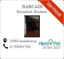 barcadi/Europäisch Kurzhaar/vermisst