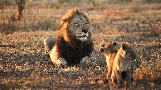 Safari i Krugerparken, Sør-Afrika - Safari in the Kruger park, South-Africa #travel #safari #south-africa http://travels.kilroy.no/destinasjoner/afrika/sor-afrika/safari