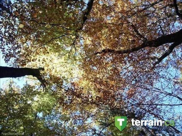 La tête dans les arbres à Lac-Mégantic!