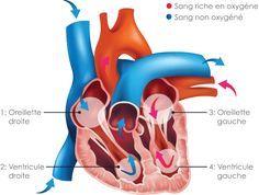 Qu'est-ce que l'insuffisance cardiaque