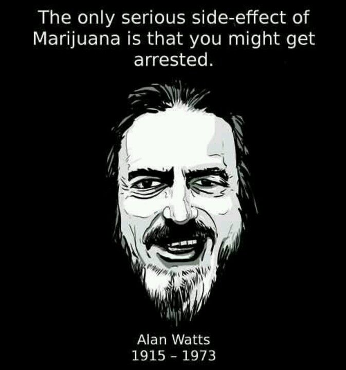 Allen Watts quote on marijuana  More Half-Baked Quotes: http://marijuanagreenpages.com/2013/04/20/half-baked-quotes/