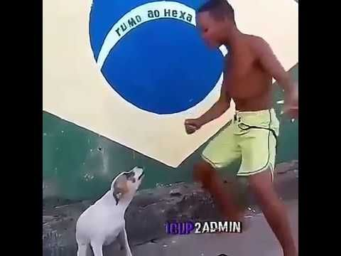 Funny Dancing Dog Short Video Dance Humor Funny Dog Fails