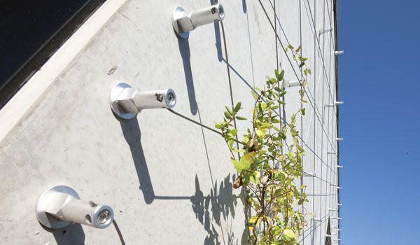 Les 10 meilleures images du tableau mur v g talis sur - Support plante grimpante ...