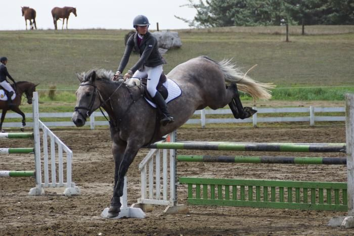 http://horsezone.com.au/category/364/Sport-Horse/listings/36728/SERIOUSLY-SCOPEY-WELL-BRED-YOUNG-HORSE.html