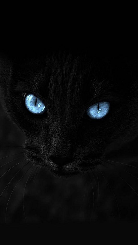 Cat Black Blue Eyed Glance Wallpaper Background Iphone Kucing Dua Warna Kucing Menggambar Kucing