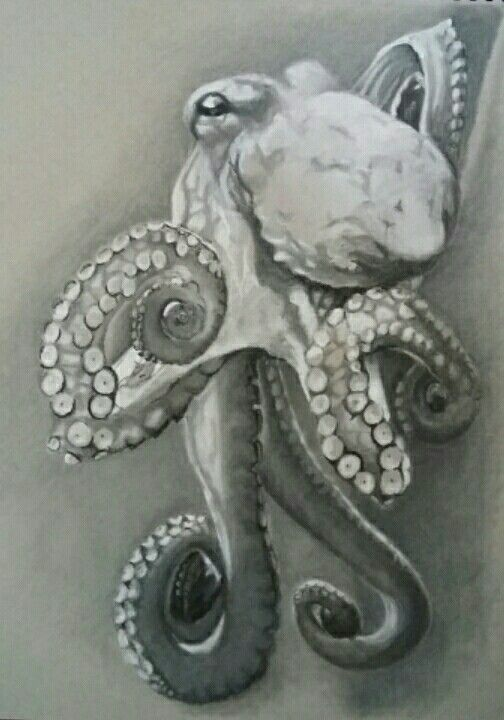 "Octopus ( by Moey, April 2016 conte crayon and pastel pencil on paper, 11x14"")"