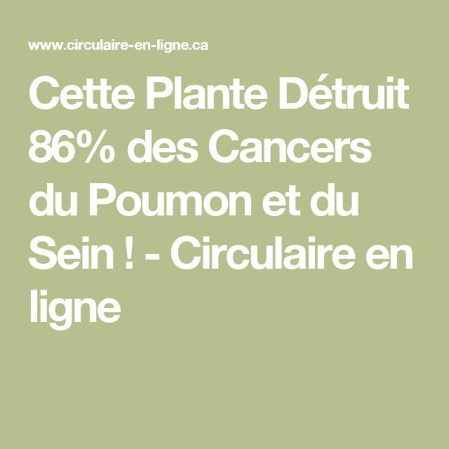 Cette Plante Détruit 86% des Cancers du Poumon et du Sein ! - Circulaire en ligne