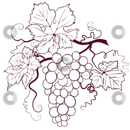 Vector of Grapes With Leaves