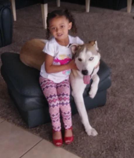 Kai - Siberian Husky Dog For Adoption in Corpus Christi TX 7