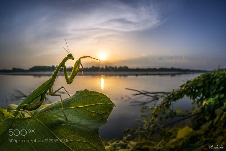 Il risveglio della mantide (Roberto Aldrovandi / Reggio Emilia / Italia) #nikon D800E #macro #photo #insect #nature