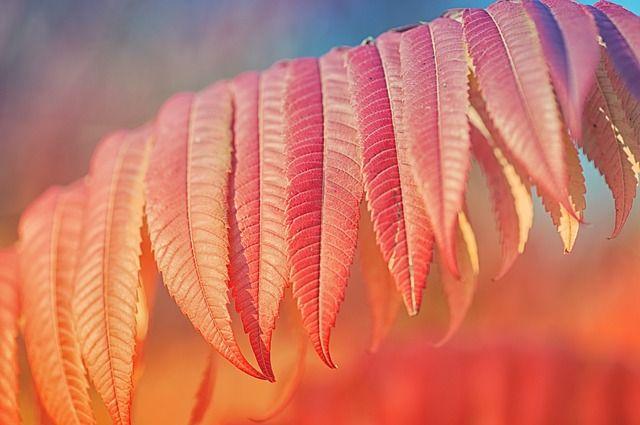 @pixabay | by Nikiko
