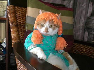 Sorry- just had to post this.  An Anne of Green Gables costume on a cat!  Sheesh!