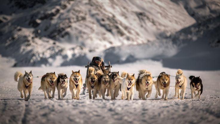 極北の大地を犬ぞりで駆ける | Travelplanet